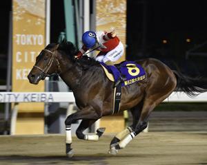 今週は大井競馬開催!東京記念(SI)が開催されます。