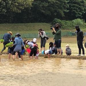 田植えのイベントに家族で参加しました! ~お米のルーツを知ってますか?~