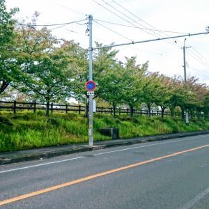桜並木の紅葉見ながらのモーニング コナズ珈琲