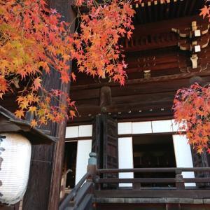 京都紅葉狩り第二弾‼️  名所真如堂へ