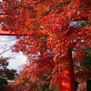 京都紅葉狩り第三弾‼️ 世界遺産の森を歩いてみて感じること