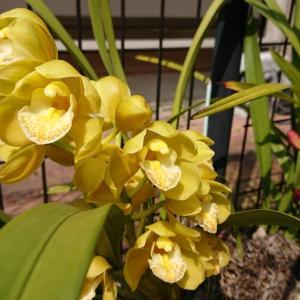春❗大好きなお花の季節にウキウキ