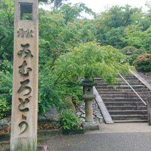 雨の京都の楽しみといえば 京都宇治あじさい寺