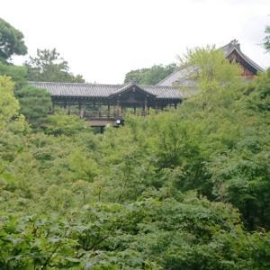 今だけの桔梗を愛でる京都の特別公開 東福寺天得院