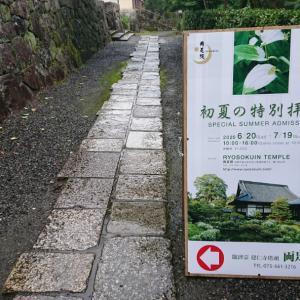 今シーズンこれでラスト⁉️ 雨の京都の楽しみ方