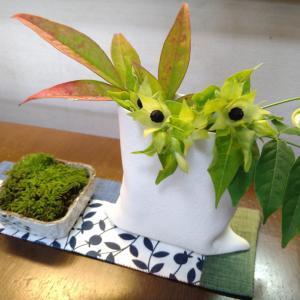 緑がうれしい雑草で楽しむテーブル飾り