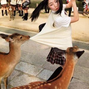 海外「奈良では普通のこと」 腹をすかせた鹿が服を引っ張っている写真が話題に