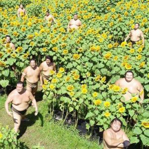 海外「自然は再生している。日本のヒマワリ畑に相撲取り達が帰ってきているぞ!」