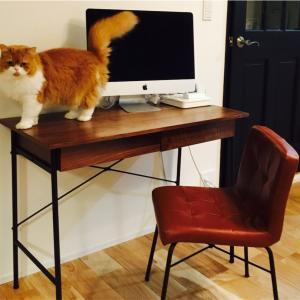 ネコとおしゃれな家づくりのアイディア