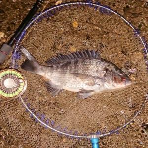夜釣りでも硬い餌!