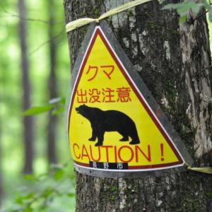 コロナの次は熊かい?