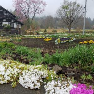 春の初越のこみち散歩