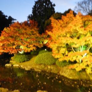 栗林公園のライトアップ〜高松の秋の紅葉スポット2017〜