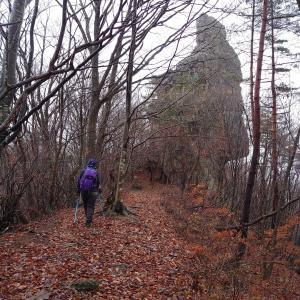 【群馬、みなかみ町】熊の気配満載の吾妻耶山。早く山から抜け出したいのに、下り道が滑る滑る《後編》2019年11月23日(土)