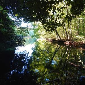 【埼玉、美里町】朝のひま散歩で、普門寺から溜池に抜けてみる。2020年6月17日(水)