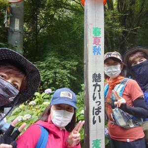 【埼玉、越生町】クリさんとアジサイを見に行く。2020年6月24日(日)