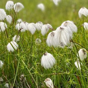 【長野、志賀高原】雨予報の日は花を見ながら池めぐり《前編》2021年7月4日(日)