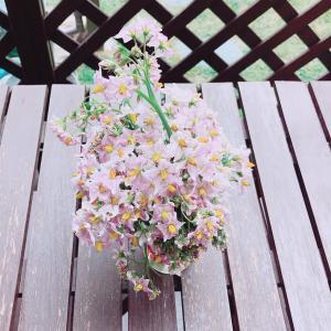 『 ジャガイモの花 』