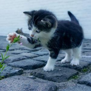 【スピリチュアル】ペットって偉いね!