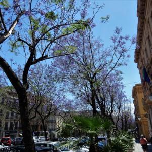 【カリアリ旅行記】1:食べて歩いて、昼寝するだけ。サルデーニャ島のカリアリ