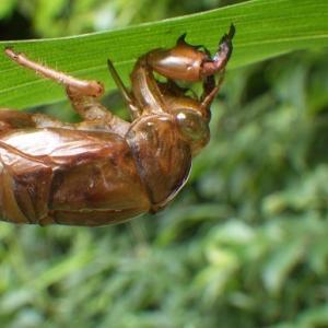 虫たちの日々