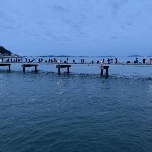 豊浜釣り桟橋でイワシ。