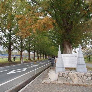 滋賀県をぶらぶらと・マキノ高原メタセコイア並木