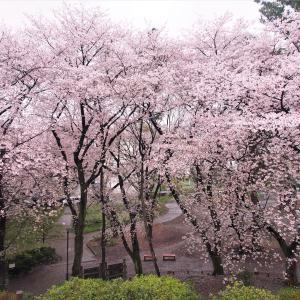 3年前の東京で見た桜
