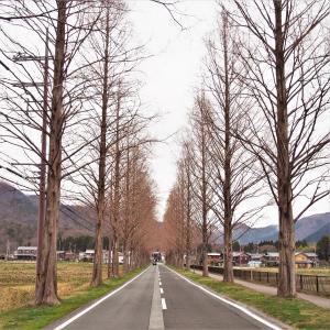 ただただ、桜を眺めながらドライブ その3