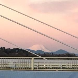 桜色の富士