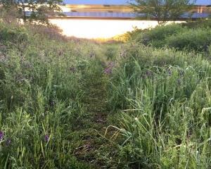 草藤の小径