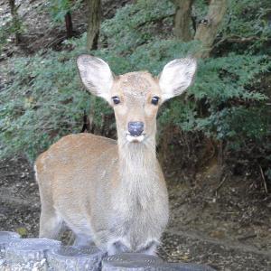 奈良で鹿と戯れて腹一杯食った日