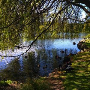 散歩が気持ち良い季節になって参りました – Western Springs –