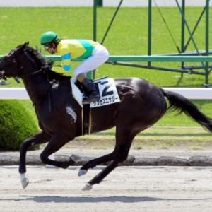 今年も地方馬が意地を見せるか!?JpnⅡ東京盃