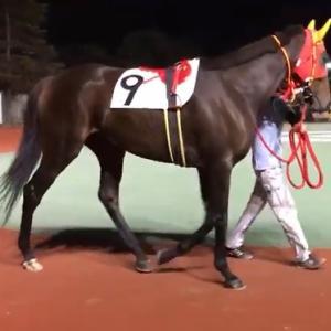 牝馬のダートグレード競走 JpnⅢ TCK女王盃