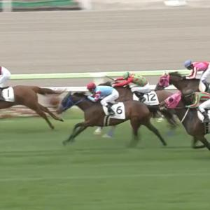 函館開催最終週に2歳馬同士で行われる最初の重賞、GⅢ函館2歳ステークス。
