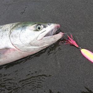 鮭鮭鮭‼️
