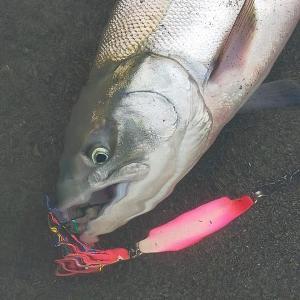 鮭爆‼️part2