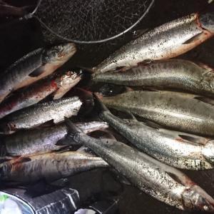 鮭強化合宿‼️‼️