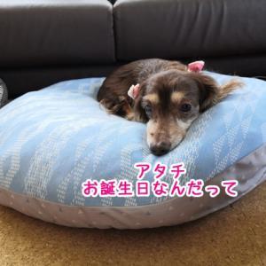 ぷりん15歳になりました。