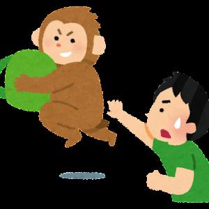 ランニング中の24歳女性、サルに足をかまれ軽傷◇福岡・太宰府都府楼跡