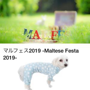 マルフェス2019 入場チケット販売開始