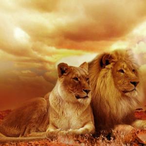 ライオンガードはライオンキングの続編!シンバやムファサも登場してエピソードも面白い!