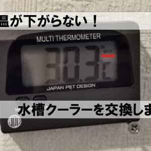 水温が下がらない!水槽クーラーを交換しました。「GEX クールウェイ100」→「レイシー LX-501NX」