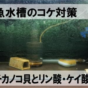 古代魚水槽のコケ対策。カバクチカノコ貝とリン酸・ケイ酸吸着材