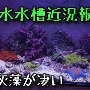半年放置した海水水槽の近況報告【2021.08.05】