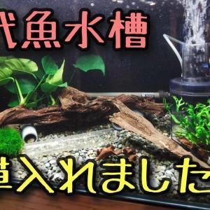 古代魚水槽が寂しかったので、水草を入れてました。