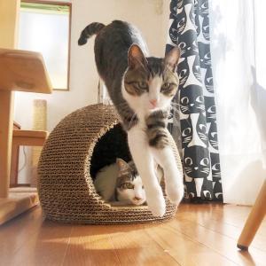 猫も寝不足運動不足