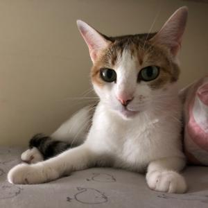 野良猫から保護猫になって1ヶ月