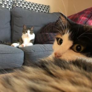 やっぱり三毛猫は最強♪